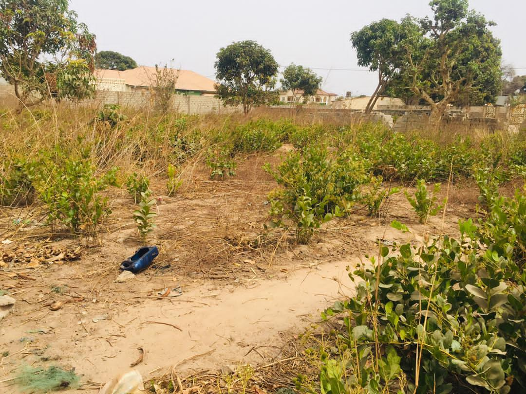 Empty land for sale in kotu 15 x 25 meters for D2,500,000