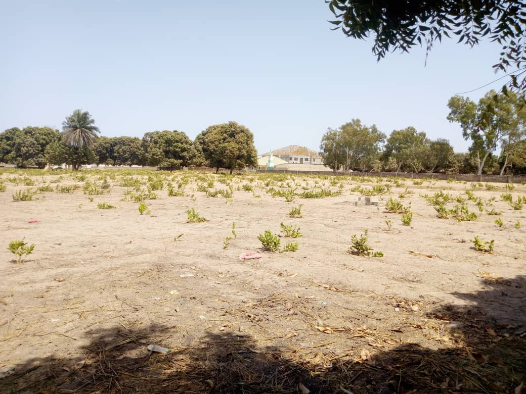 empty plots of land for sale in brufut 15 x 30 meters not far from the electricity and the price is D400,000