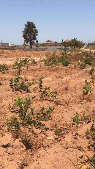 EMPTY LAND FOR SALE AT SALAGI D500,000