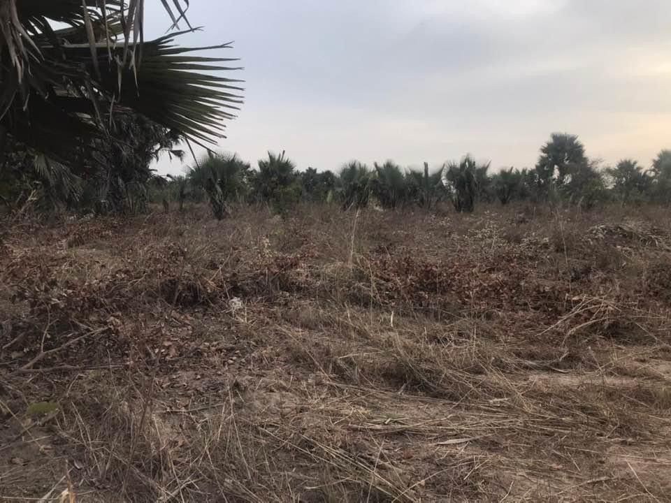 100 x 100 empty plots of land for sale at Sanyang seaview D1.7million with negotiation call or whatsapp 002203997772
