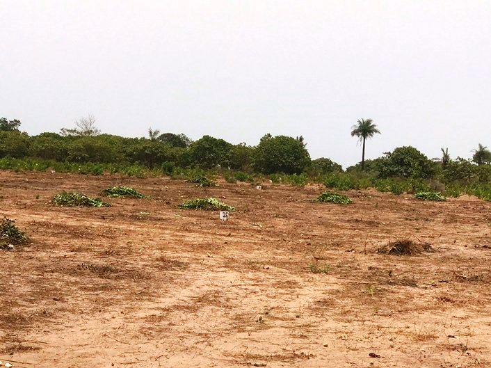 20 X 20 METERS EMPTY LAND FOR SALE AT SANYANG CASH PRICE D250,000 AND INSTALLMENT OF ONE YEAR D300,000