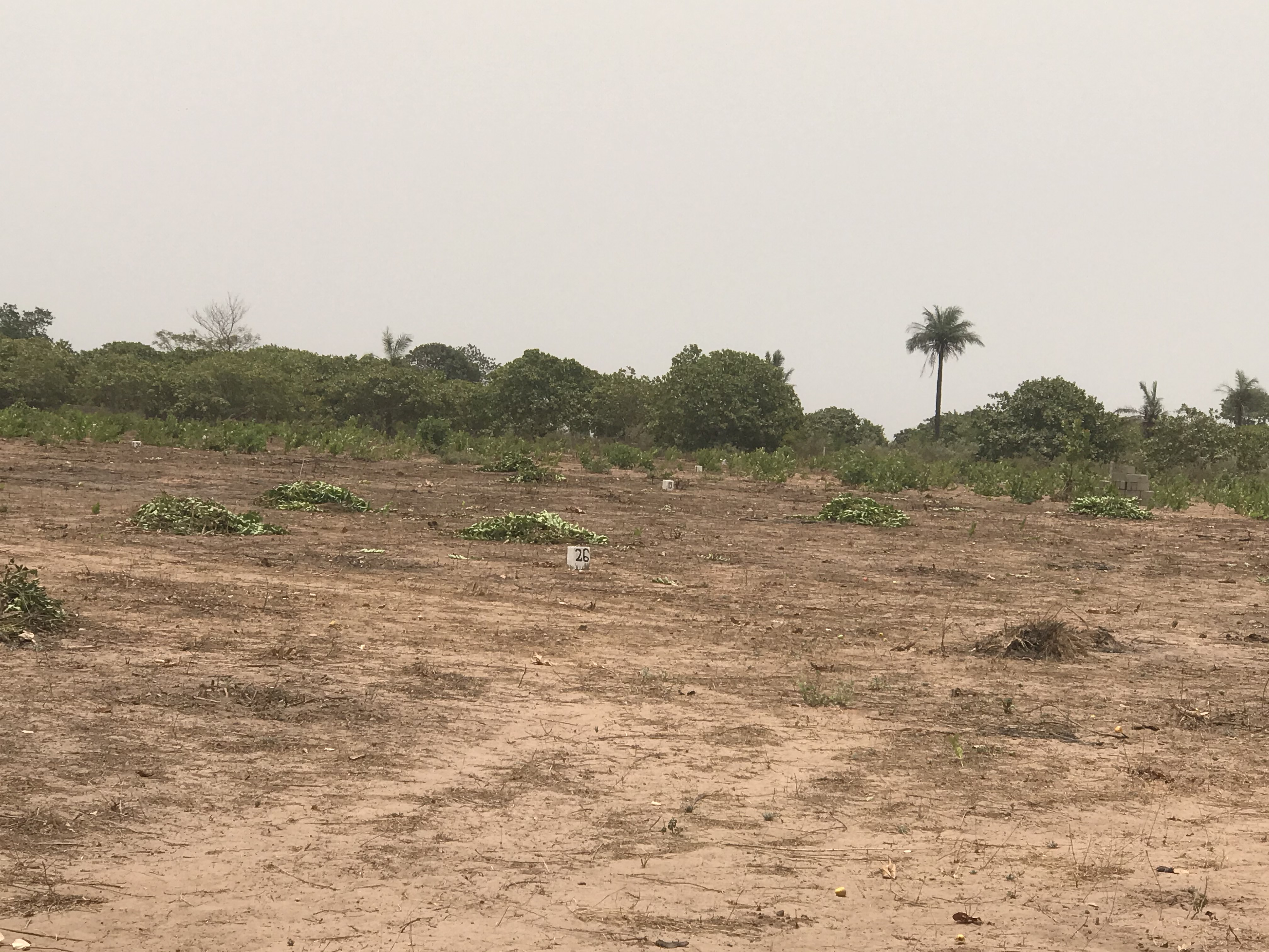 Residential plots of land measuring 20 x 20 meters for sale at Sanyang few meters from the highway  cash price D250,000 mortgage price D300,000 payable in 1 year