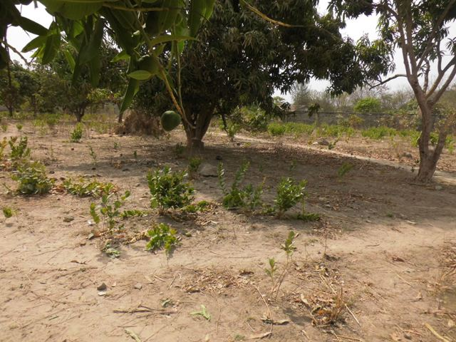 PLOT OF LAND FOR SALE AT SUKUTA 20 X 25 METERS FOR D650,000