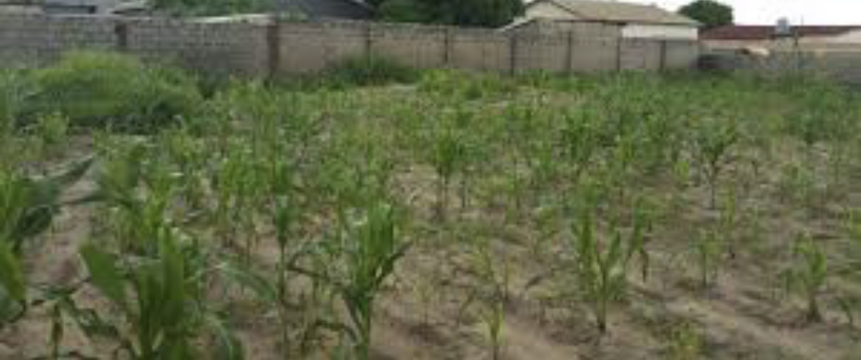 property for sale in manjai measuring 18 x 40 meters empty land