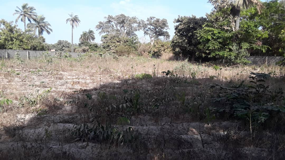empty land for sale in Brikama 20 x 25 meters for D750,000